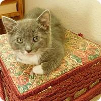 Adopt A Pet :: Fendi - Redding, CA