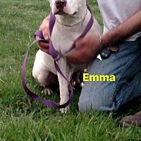 Adopt A Pet :: Emma - Benton, PA