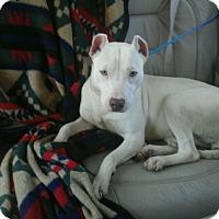 Adopt A Pet :: Beauty - Marietta, GA