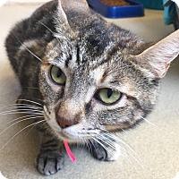 Adopt A Pet :: Nunu - Chula Vista, CA