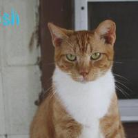 Adopt A Pet :: CRUSH - Converse, TX