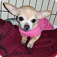 Adopt A Pet :: Chickpea - Savannah, GA