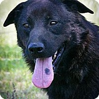 Shepherd (Unknown Type) Mix Dog for adoption in Jackson, Mississippi - Fred
