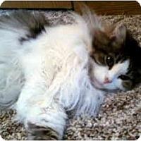 Adopt A Pet :: Lucy - Muncie, IN