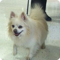 Adopt A Pet :: Angel (adopted) - Bridgewater, NJ