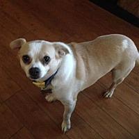 Adopt A Pet :: Rio - Rochester, MN