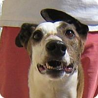 Adopt A Pet :: Iris - Oak Ridge, NC
