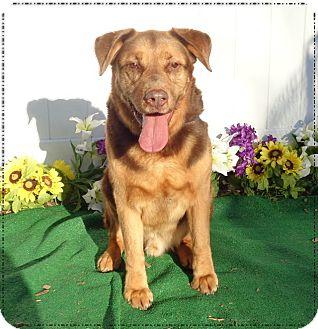 Retriever (Unknown Type) Mix Dog for adoption in Marietta, Georgia - JOSEM