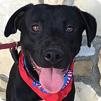 Adopt A Pet :: J.J. - Canoga Park, CA