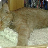 Adopt A Pet :: Duke - Whittier, CA