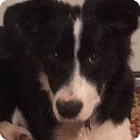 Adopt A Pet :: JESSIE - San Pedro, CA