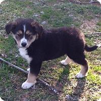 Adopt A Pet :: Bun Bun - Bedford, VA