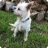 Adopt A Pet :: Brody - San Antonio, TX
