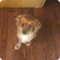 Adopt A Pet :: Lady - Fort Collins, CO