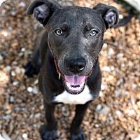Adopt A Pet :: Pepper - Chattanooga, TN