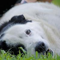 Adopt A Pet :: Whiskey - Media, PA