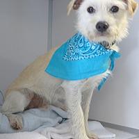 Adopt A Pet :: Pablo - Manning, SC