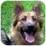 Photo 3 - German Shepherd Dog Dog for adoption in Houston, Texas - Guinness
