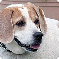 Adopt A Pet :: Wanda - Phoenix, AZ