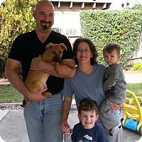 Adopt A Pet :: Amara - Sacramento, CA