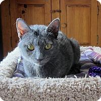 Adopt A Pet :: Lexie - Roseville, MN