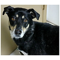 Adopt A Pet :: Tinker - Forked River, NJ