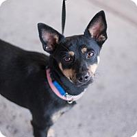 Adopt A Pet :: Jaylo - Syracuse, NY