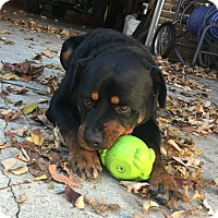 Adopt A Pet :: Sampson - Frederick, PA