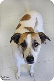 Australian Shepherd Mix Dog for adoption in Yukon, Oklahoma - Heath