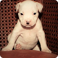Adopt A Pet :: Madeline - Oviedo, FL