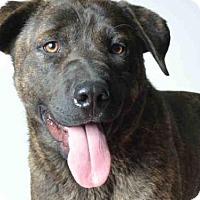 Adopt A Pet :: POSEY - Ukiah, CA