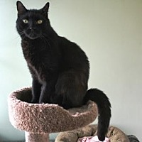 Adopt A Pet :: Wink - Penndel, PA