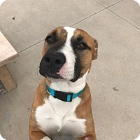Adopt A Pet :: Zeb - Aurora, CO