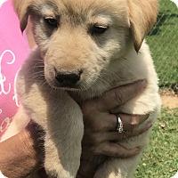Adopt A Pet :: Briggs - Glastonbury, CT