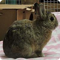 Adopt A Pet :: Coco - Woburn, MA