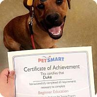Adopt A Pet :: Duke - Lebanon, ME