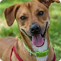 Adopt A Pet :: Tbow * - Miami, FL