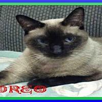 Adopt A Pet :: OREO - Fort Walton Beach, FL