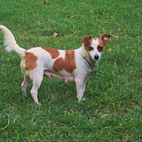 Adopt A Pet :: LUNA - Rutherfordton, NC
