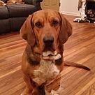 Adopt A Pet :: Sweet Ellie
