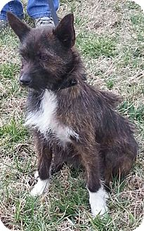 Terrier (Unknown Type, Small) Mix Dog for adoption in Foster, Rhode Island - Bootsie $100 off