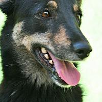 Pointer/German Shepherd Dog Mix Dog for adoption in Birmingham, Alabama - Winnie