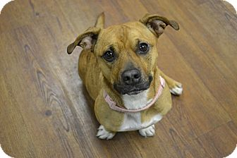 Terrier (Unknown Type, Medium)/Dachshund Mix Dog for adoption in Lake Odessa, Michigan - Kindel
