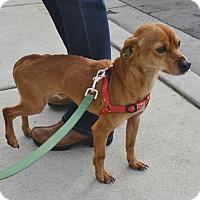 Adopt A Pet :: Stimpy - Meridian, ID