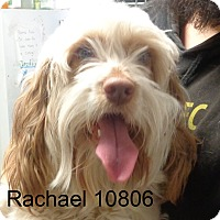 Adopt A Pet :: Rachael - Greencastle, NC