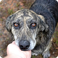 Adopt A Pet :: Jake - Knoxville, TN