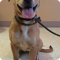 Adopt A Pet :: Juniper - Woodward, OK