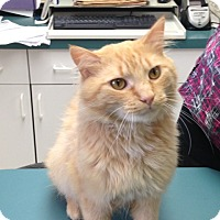 Adopt A Pet :: Theo - Rochester, NY