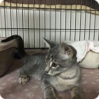 Adopt A Pet :: Elijah - Fountain Hills, AZ