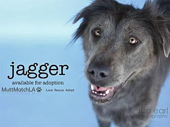 Labrador Retriever Mix Dog for adoption in Castaic, California - Jagger
